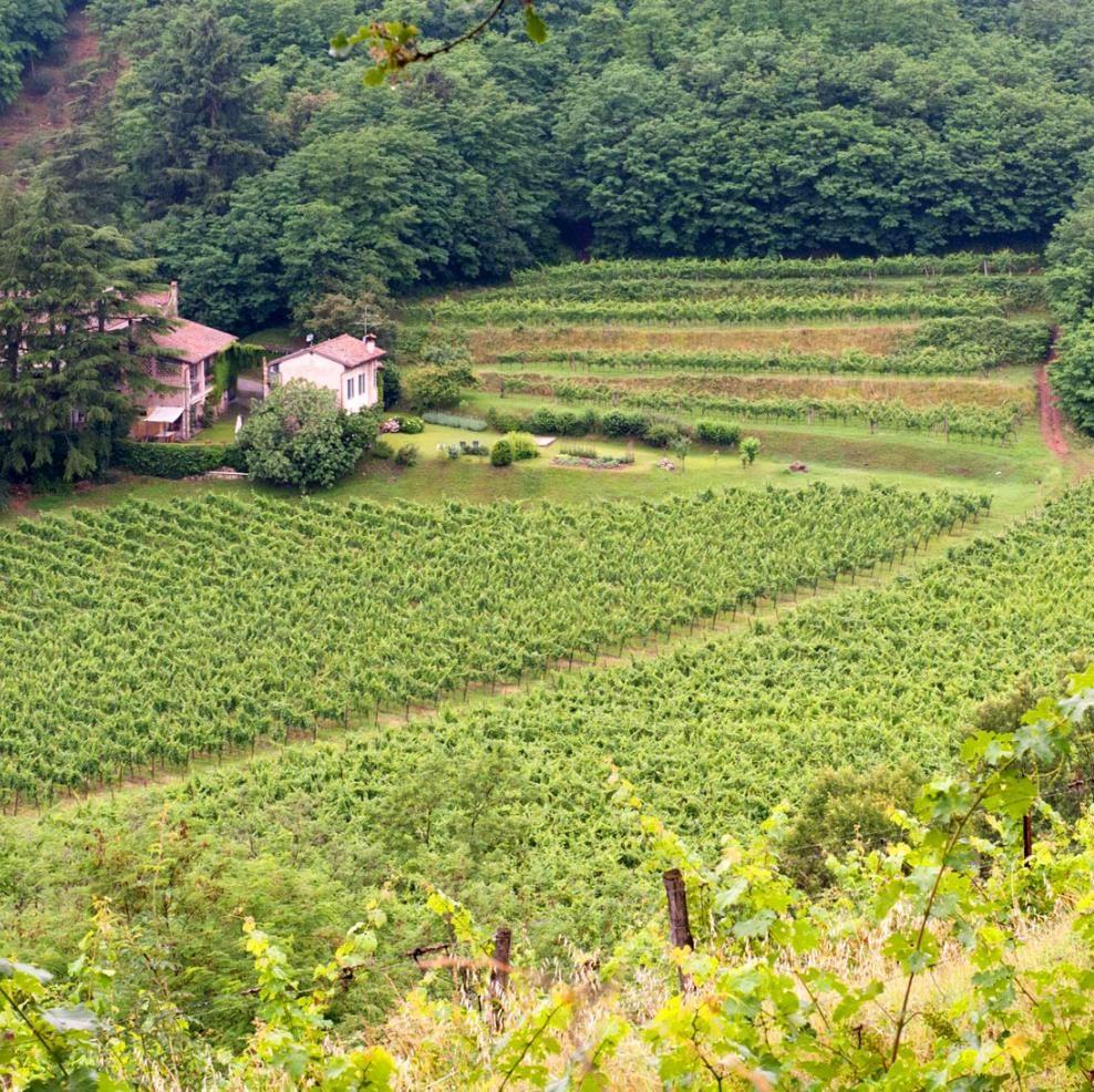 Castelveder - vitigni Franciacorta - Monticelli Brusati