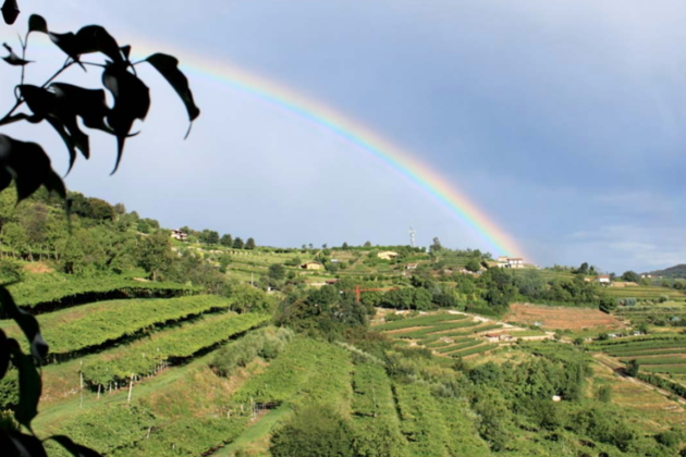 le cantorie rainbow
